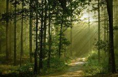 Więcej o: Zawiadomienie o wyłożeniu do publicznego wglądu projektów Uproszczonego Planu Urządzenia Lasu