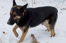 Więcej o: Poszukiwany właściciel psa