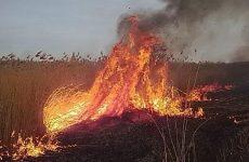 Wypalanie traw